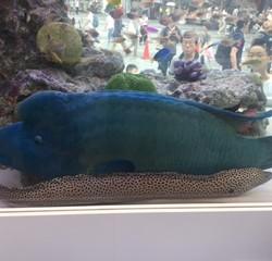 有楽町に水族館(期間限定)